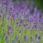 Gyógynövények az egészség védelméhez